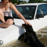 Plan for your pet's safety in a natural disaster