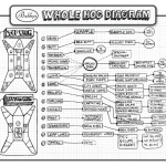 Hog Hunting - Hog Meat Cuts, butcher a hog with food ideas diagram