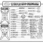 Hog Hunting - Hog Meat Cuts, butcher a hog with food ideas diagram