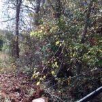 """DIY PVC deer feeder 4"""" sewer pipe in field - tree stand in background"""
