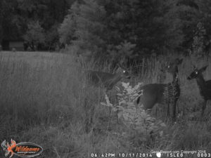 Digital Game Camera Review - New Trail Cameras for Deer Hunting Season from Wildgame Innovations - old camera