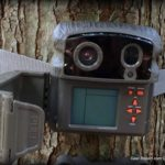Digital Game Camera Review - New Trail Cameras for Deer Hunting Season from Wildgame Innovations - Nano 22 review